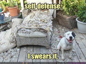 doggie defended himself from evil nasty chair
